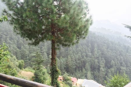 My home-stay with amazing & beautiful valley views - Shimla