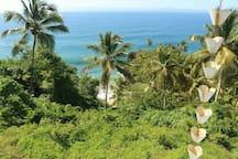 La jungla de palmeras desde la terraza