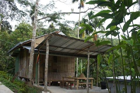 Rain Forest Inn Cameron Highlands 4