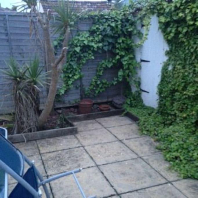 Own palm tree in garden