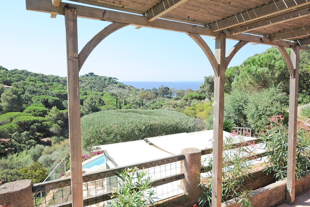 from the terrace, undress of parasol pines, sea and island