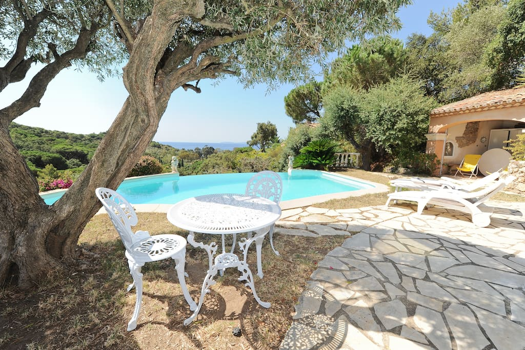 under the old olive tree,  unique landscape: sea, island, parasol pines