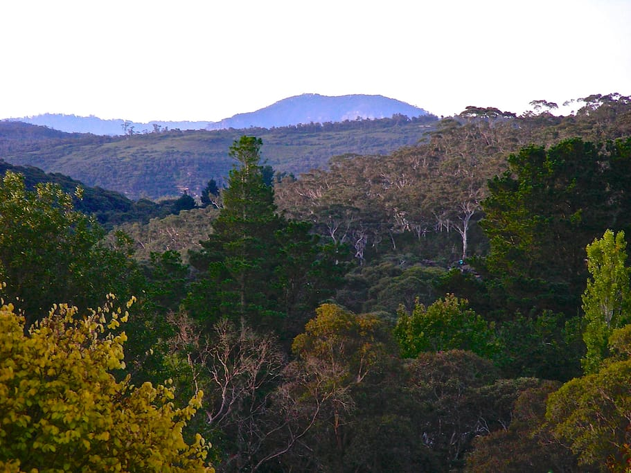 View to Mt Banks & Grose Valley.
