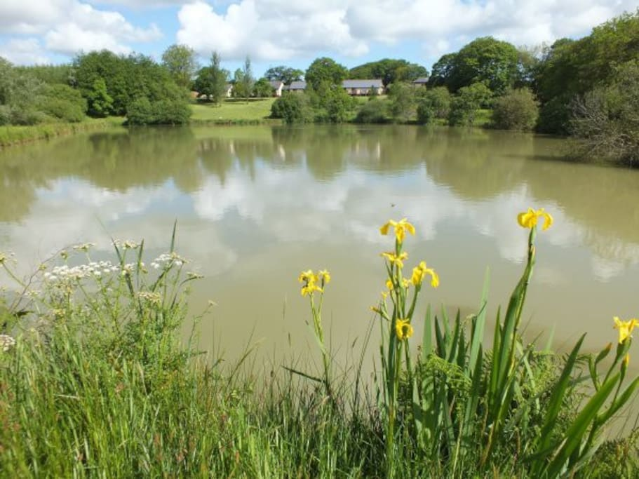 The lodges at Blagdon Farm overlook a 1.5 coarse fishing lake