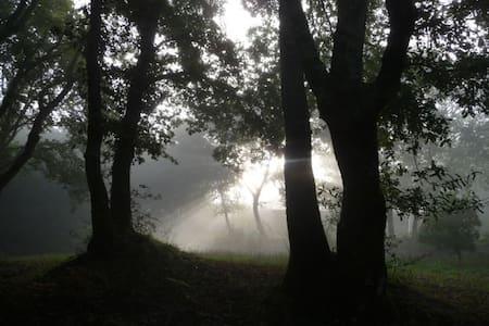 Quint das Aguias - Peacock Cottage - Rubiães - Dům