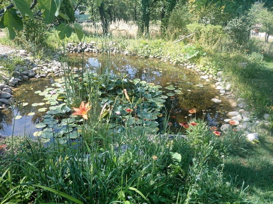 Le bassin (avec ses poissons et ses grenouilles) dans la partie supérieure du jardin.