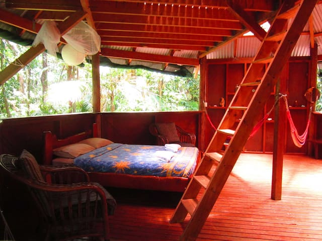 Jungle Treehouse - Cape Tribulation - Dům na stromě