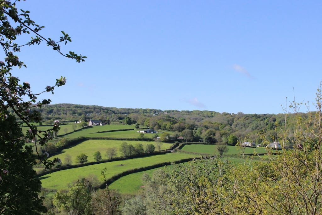 View across the Tamar Valley from the garden.