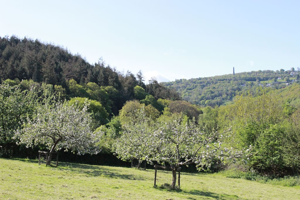 The Tamar Valley from the Orchard.