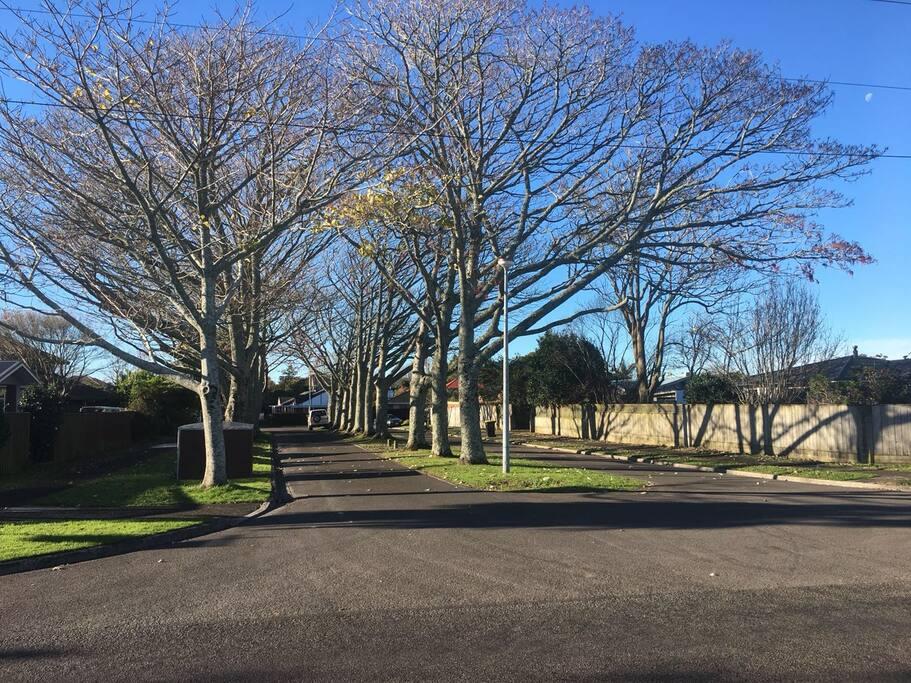 我们的B&B位于Tauranga最高尚的小区Matua.它三面临海,宁静而美丽,洋人邻居友善而纯朴。这里堪称世外桃源,绝对的地球最后一块净土。