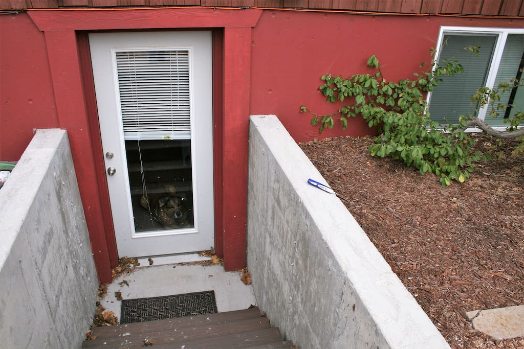 Basement apt private entrance. Dog not included! :)