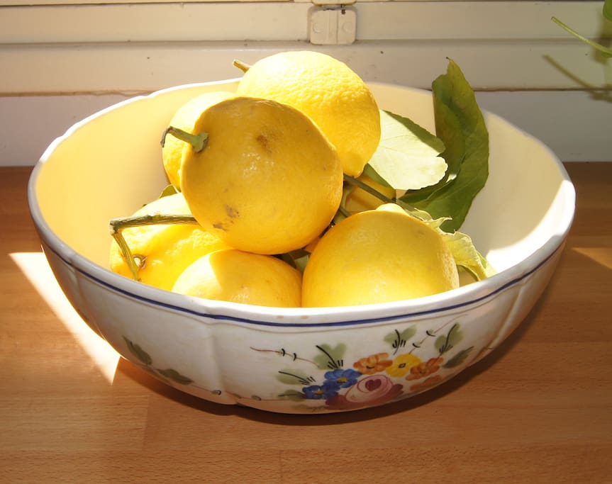 Locally grown lemons