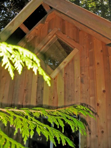 The loft window, looking out on the cedar trees.