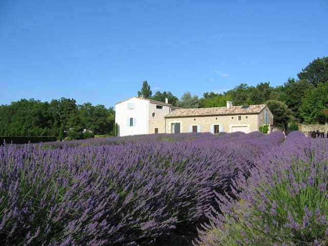 Provence Studio Apartment-Lavender - valaurie