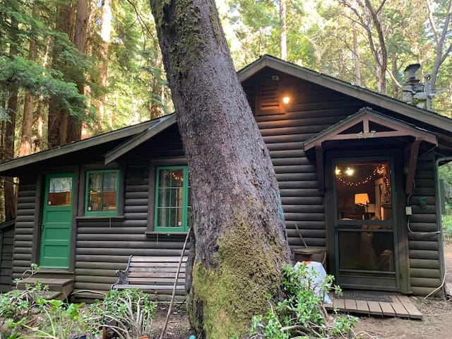 mountain cabin in the redwoods