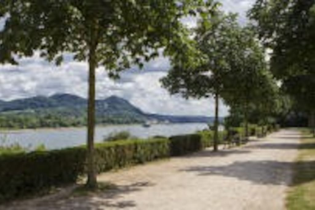 Rheinriver in walk distance to the flat