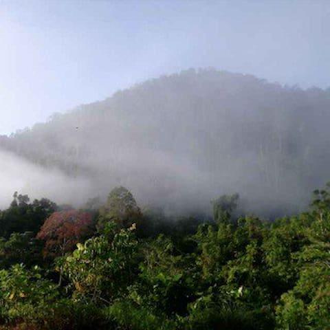 Travel in Nature - Kuching - Casa