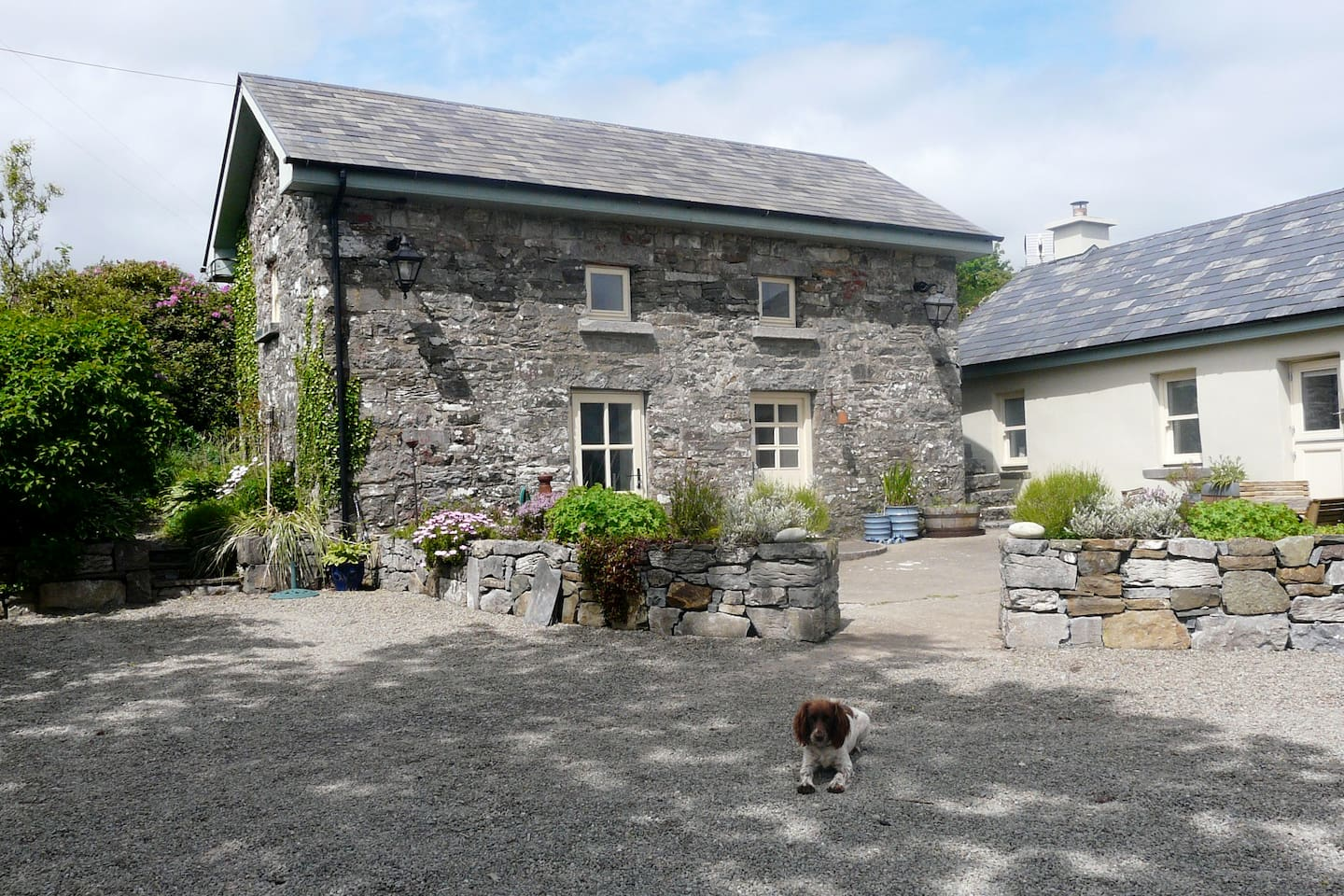 The Old Stone Barn (and Coco)