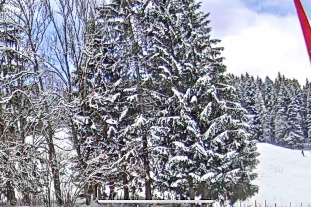 Le chalet La Puce se trouve sur le bas de la piste de ski