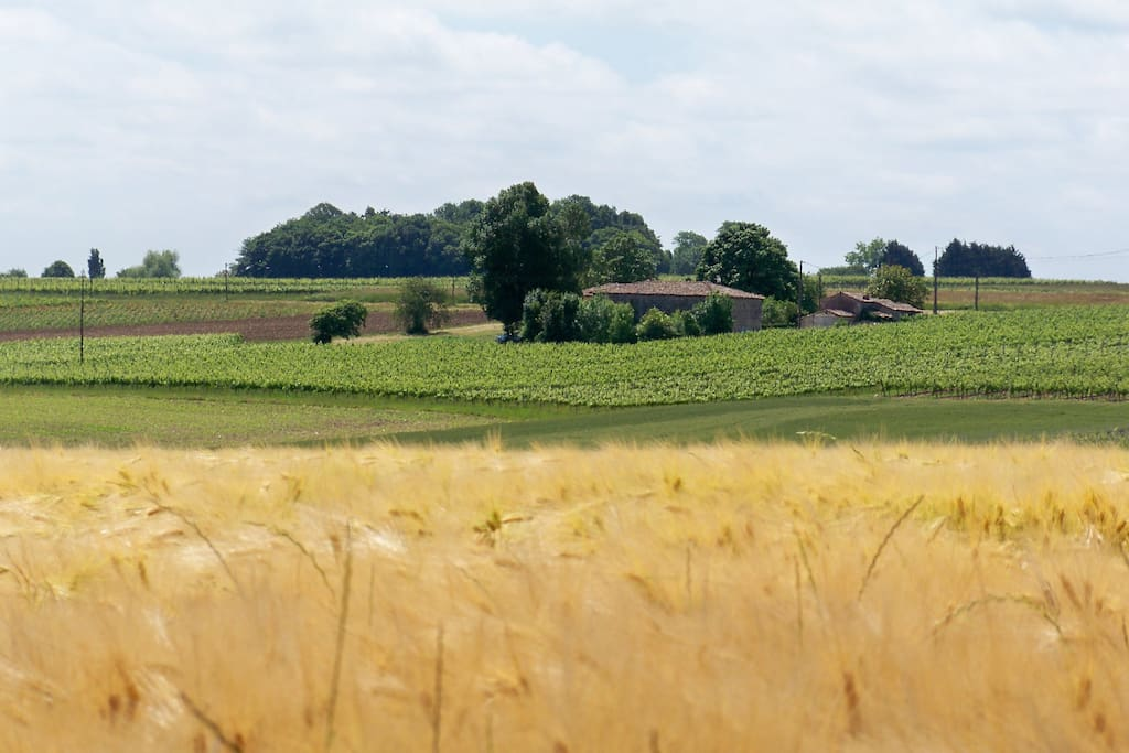 La ferme se trouve au coeur de notre vignoble.