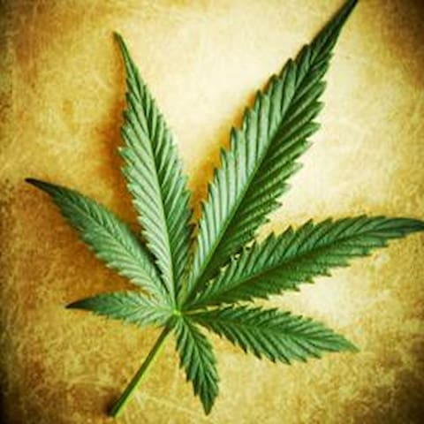 Casa Cannabis - 柯瑞斯東(Crestone) - 古巴家庭旅館(Casa particular)