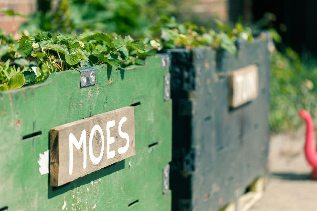Oogst je eigen groente uit de mini-moestuin