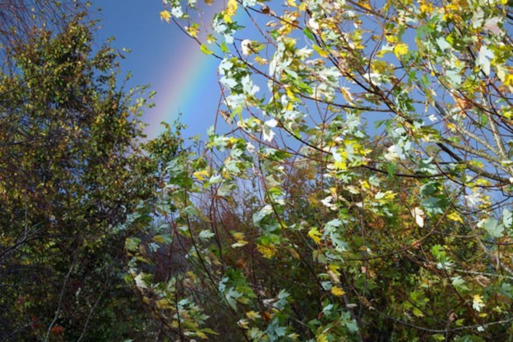 Sometimes the rainbow does end in our garden.