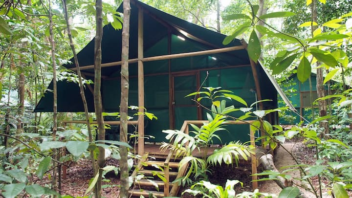 Daintree Crocodylus - Rainforest Bungalows