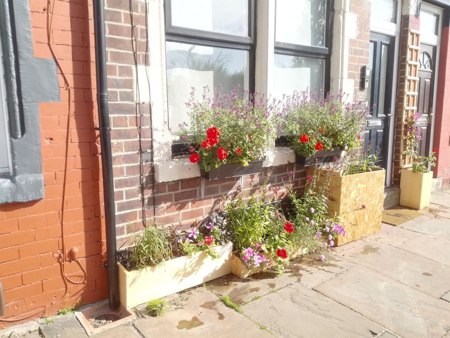 Maintained Window Boxes