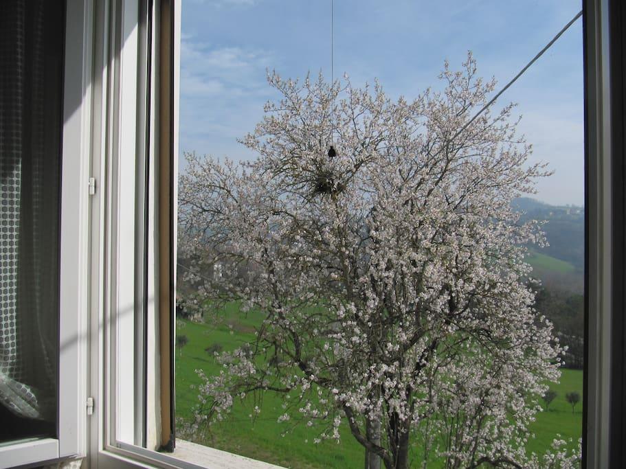 3. finestra della camera