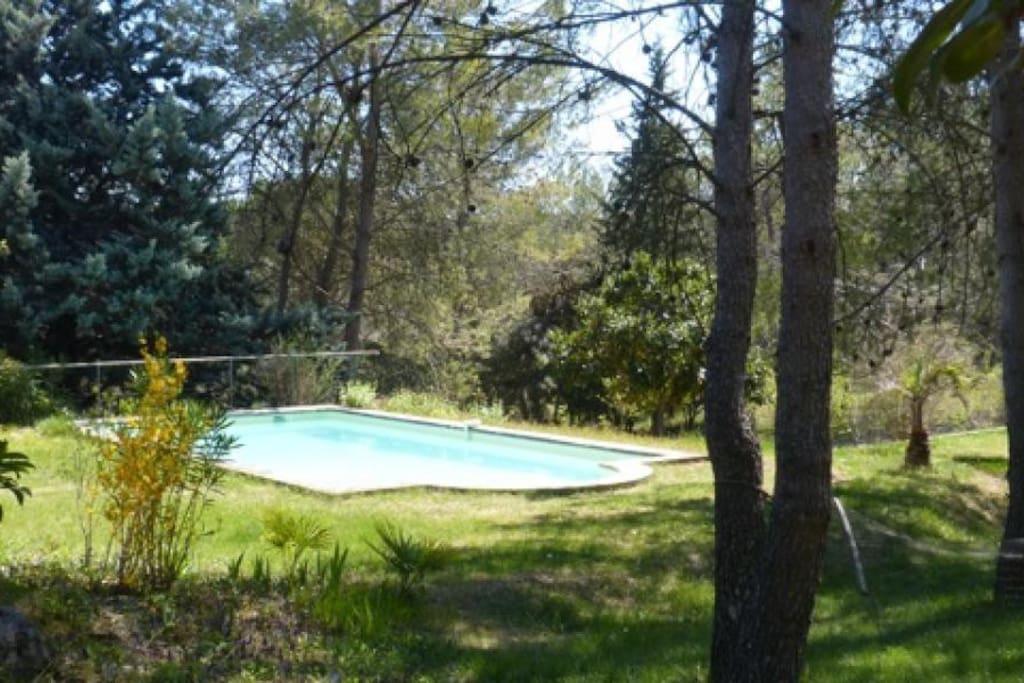La chambre d'hôte donne accès à une piscine spacieuse dans un écrin de verdure
