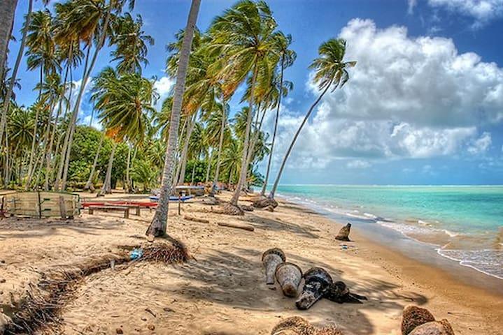 Casa a 500m da Praia de Peroba - Maragogi - House