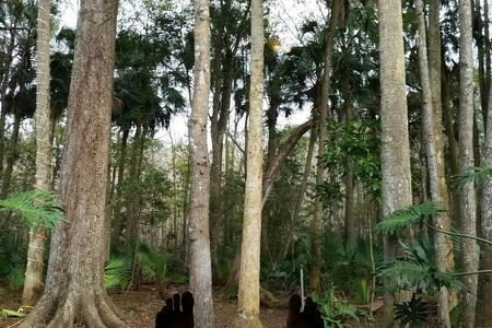 Beautiful Nature-View Florida-Room - Ház
