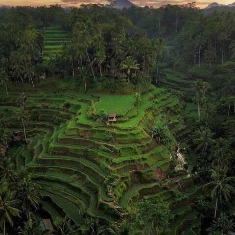 @Tegallalang rice terrace