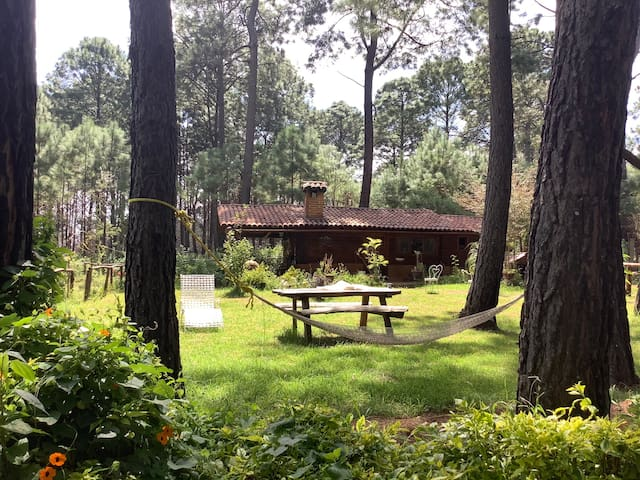 Cabaña Rústica Enmedio de un Bosque de Ensueño
