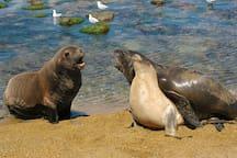 Whats up Sammy Sea Lion!