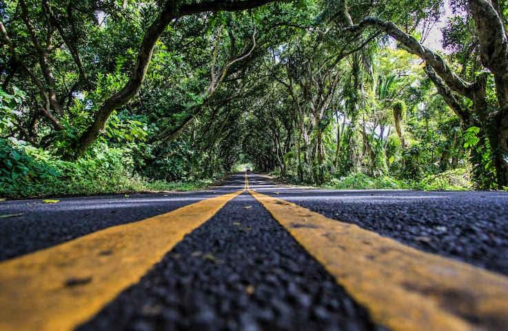 "Take a slow, relaxing drive on  Kalapana - Kapoho Road known as the ""Red Road""."