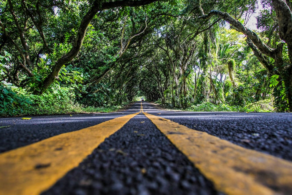 """Take a slow, relaxing drive on  Kalapana - Kapoho Road known as the """"Red Road""""."""