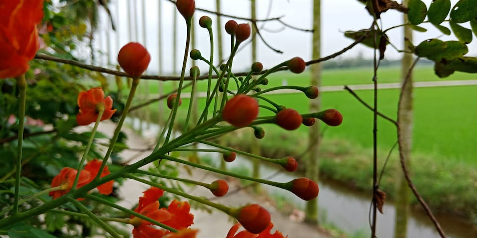 FLOWER VILLAGE 1- ROSE GARDEN VIEW