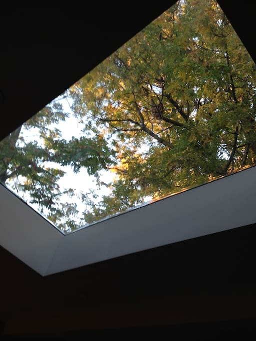View from family room through the skylight.