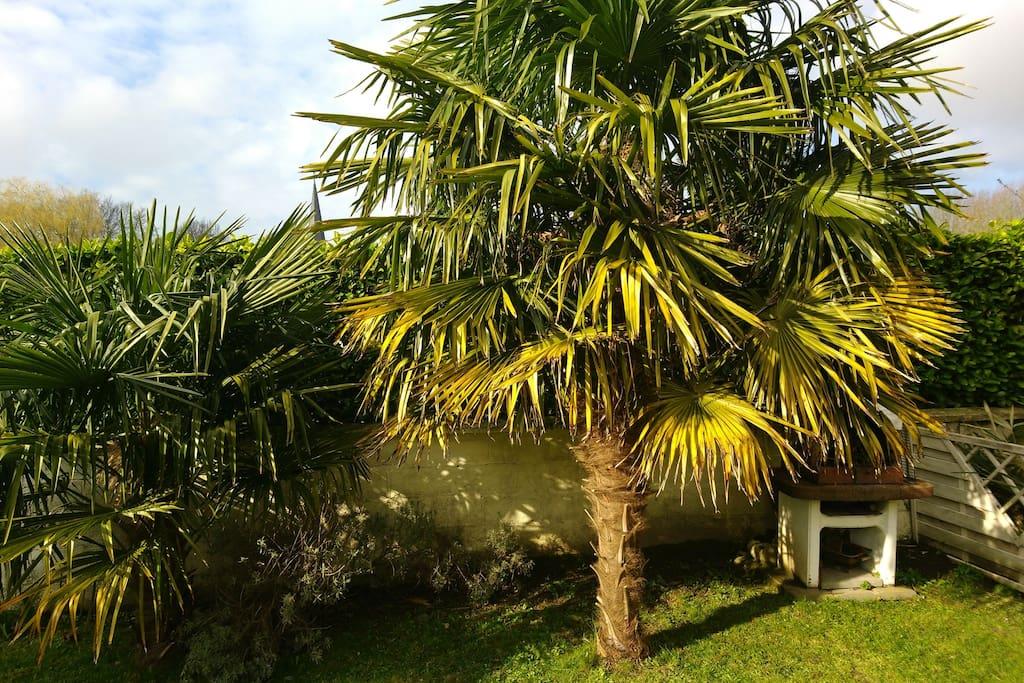 BBQ Sous les palmiers / petite réserve de charbon de bois (dépannage) dans la cabane de jardin