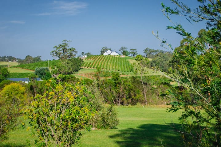 The view from Sutherland's verandah of Audrey Wilkinson's winery.