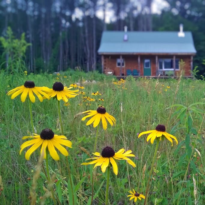 "Prior guest: ""Loved the serenity of this beautiful cabin"""