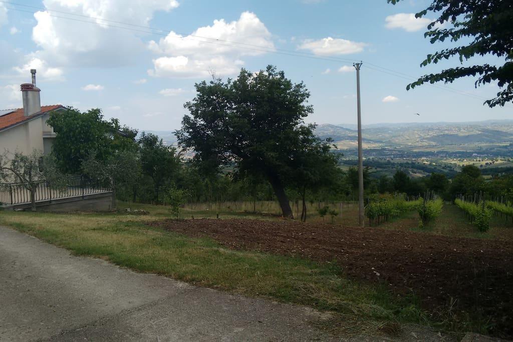 Vista casa con vigneto, terreni alberati e panorama