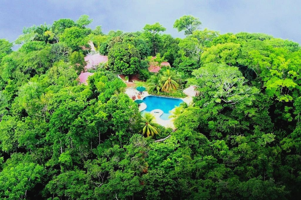 View overlooking lodge, rainforest and guest pool