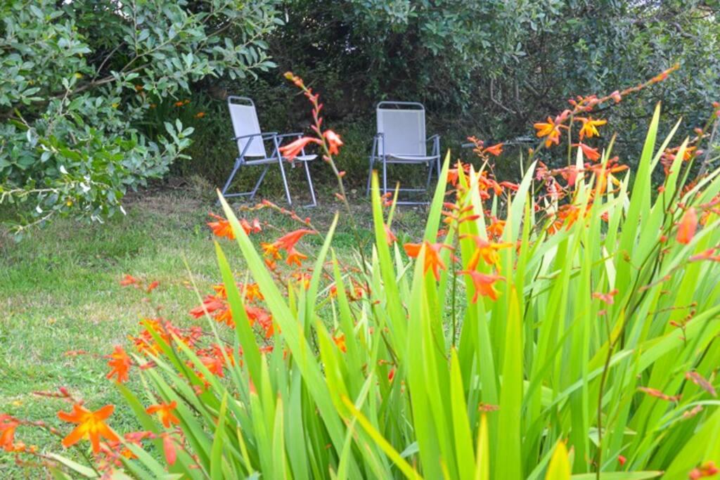 Wildflowers in my garden.