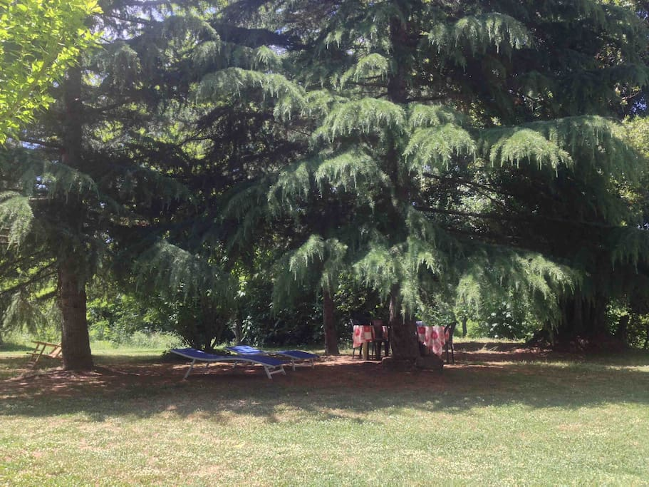 Parco/Garden. The cedar planted by us 23 years ago