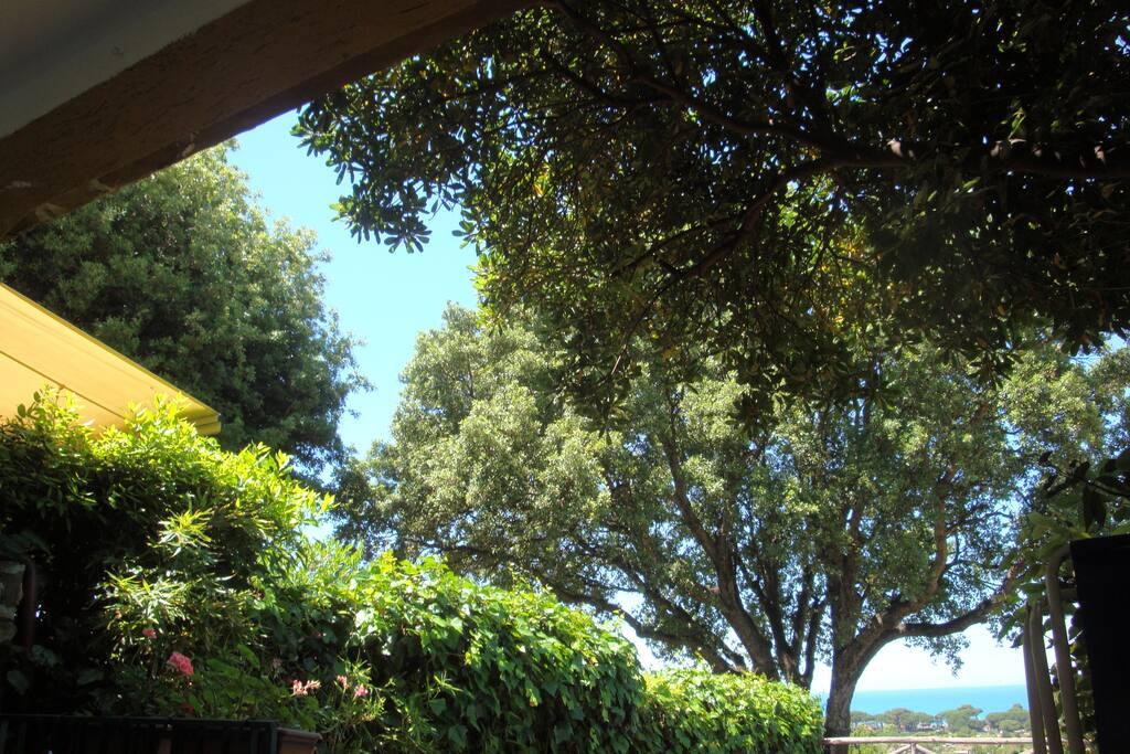 Il verde davanti casa, con il grande sughero che si staglia sul cielo azzurro