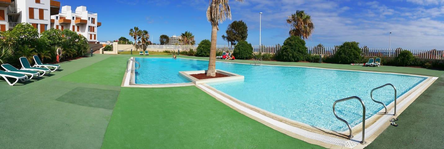 Palm on swimming pool