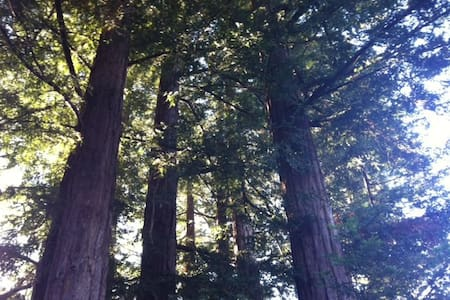 Redwood Retreat - Haus